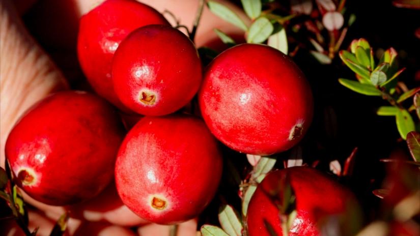 蔓越莓 Crannberry